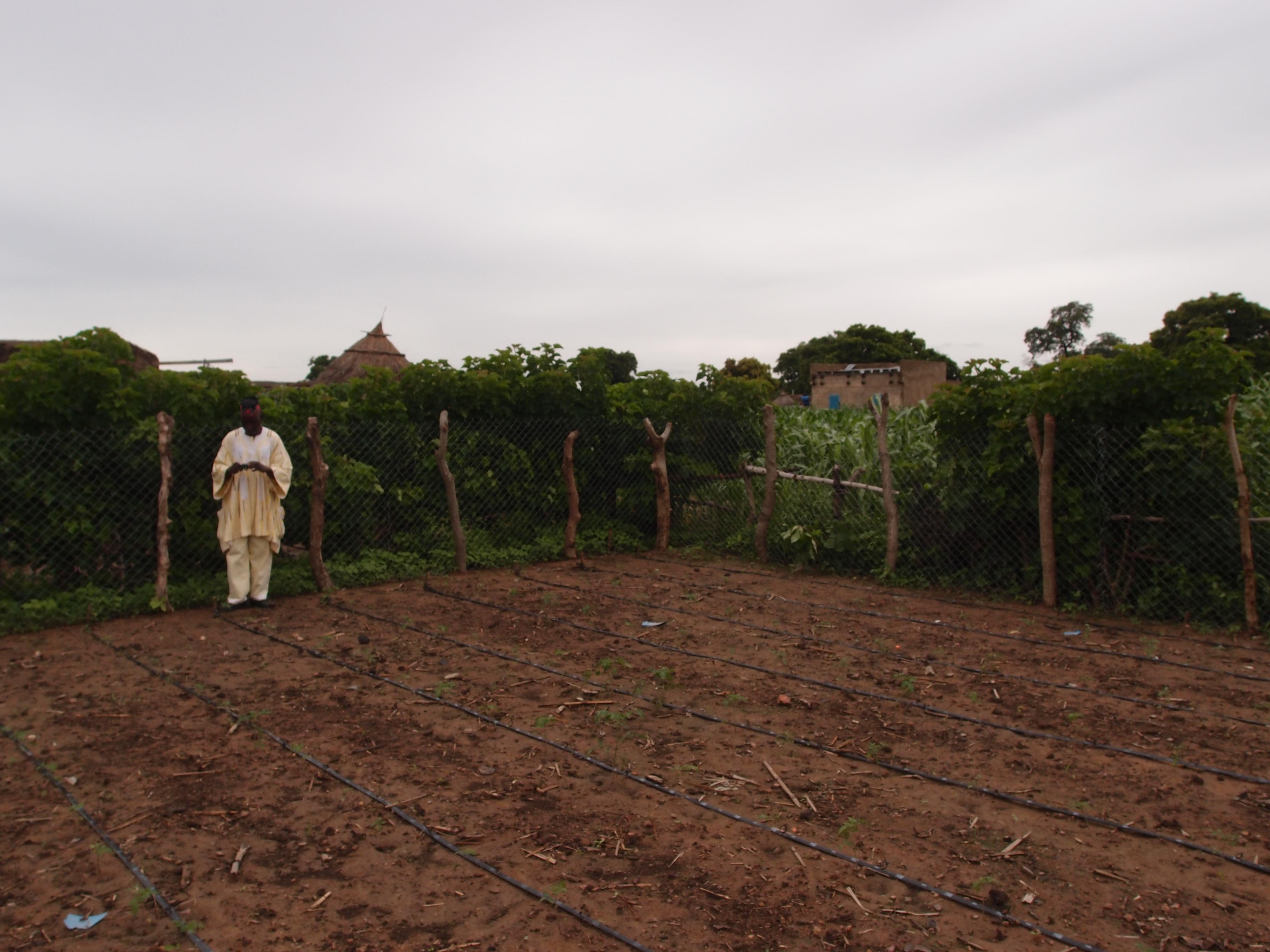 1 van de vrouwen met een tuin met druppelirrigatie